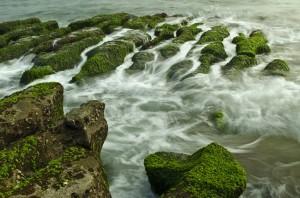 algal reef